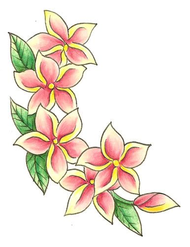386x500 Pictures Hawaiian Flowers Drawing,