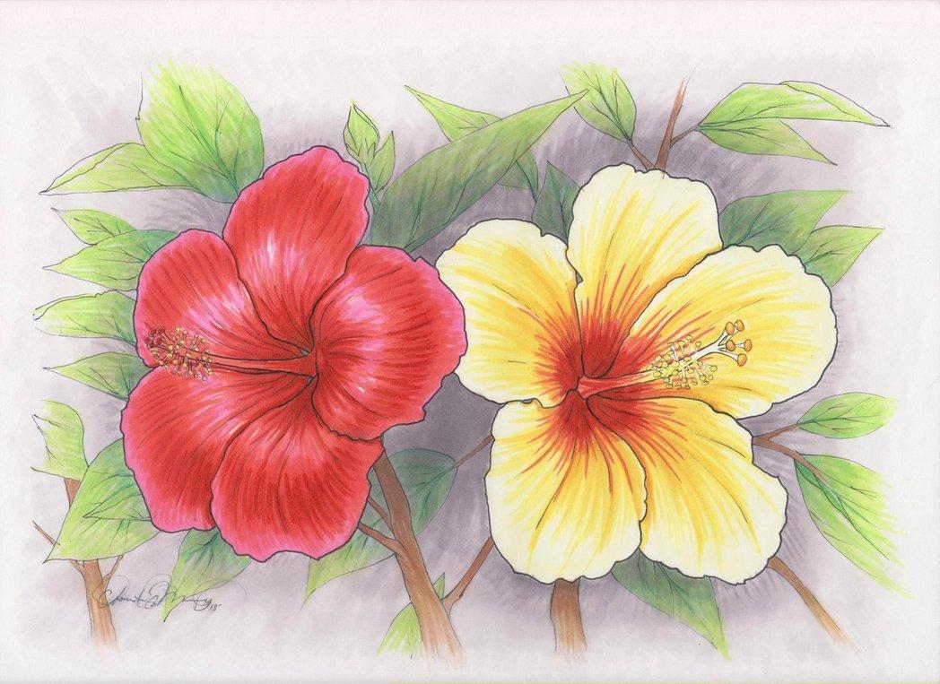 Hawaiian flowers drawing at getdrawings free for personal use 1048x763 hawaiian flowers by talonclawfange on deviantart izmirmasajfo