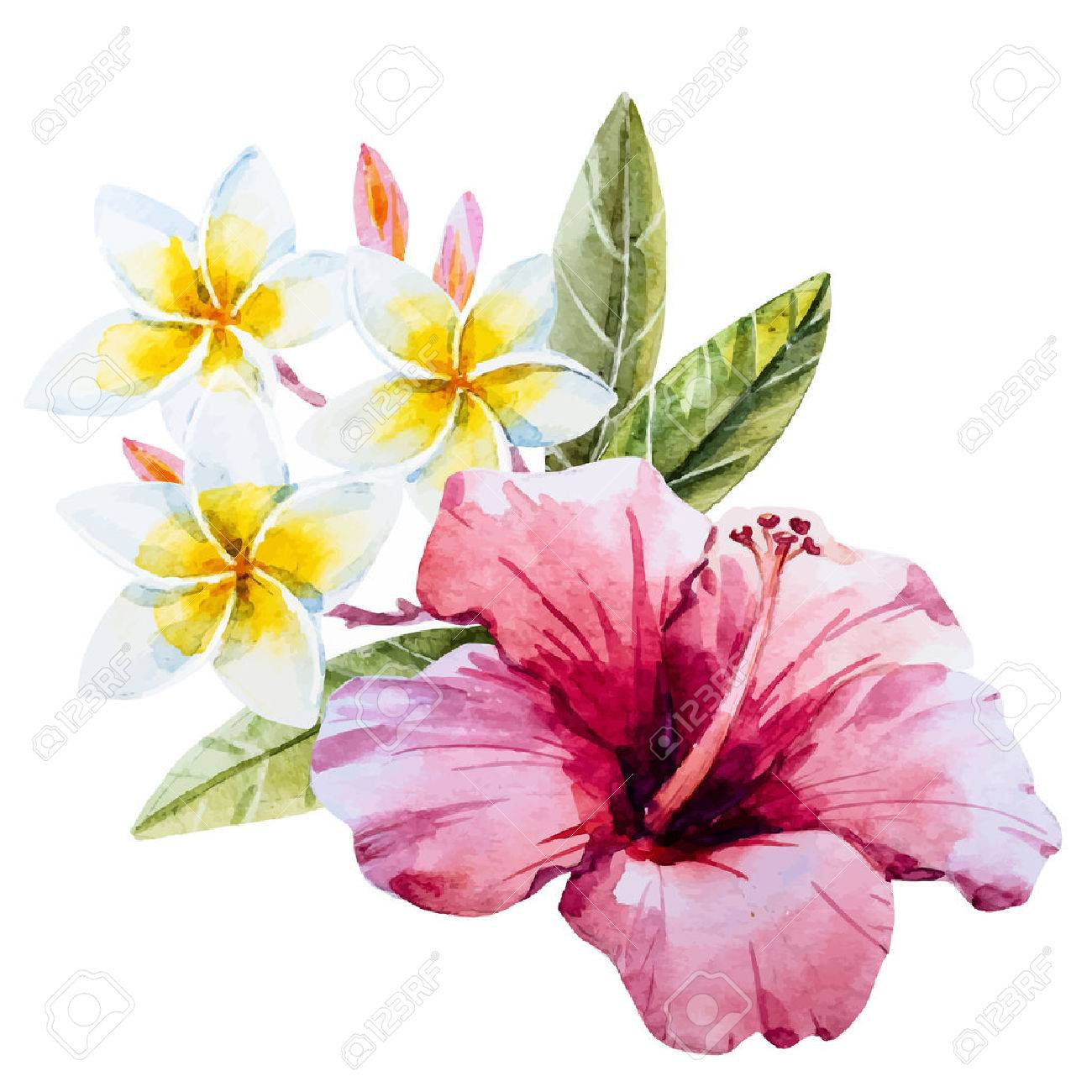 1300x1300 Beautiful Image With Nice Watercolor Hand Drawn Hibiscus Flower