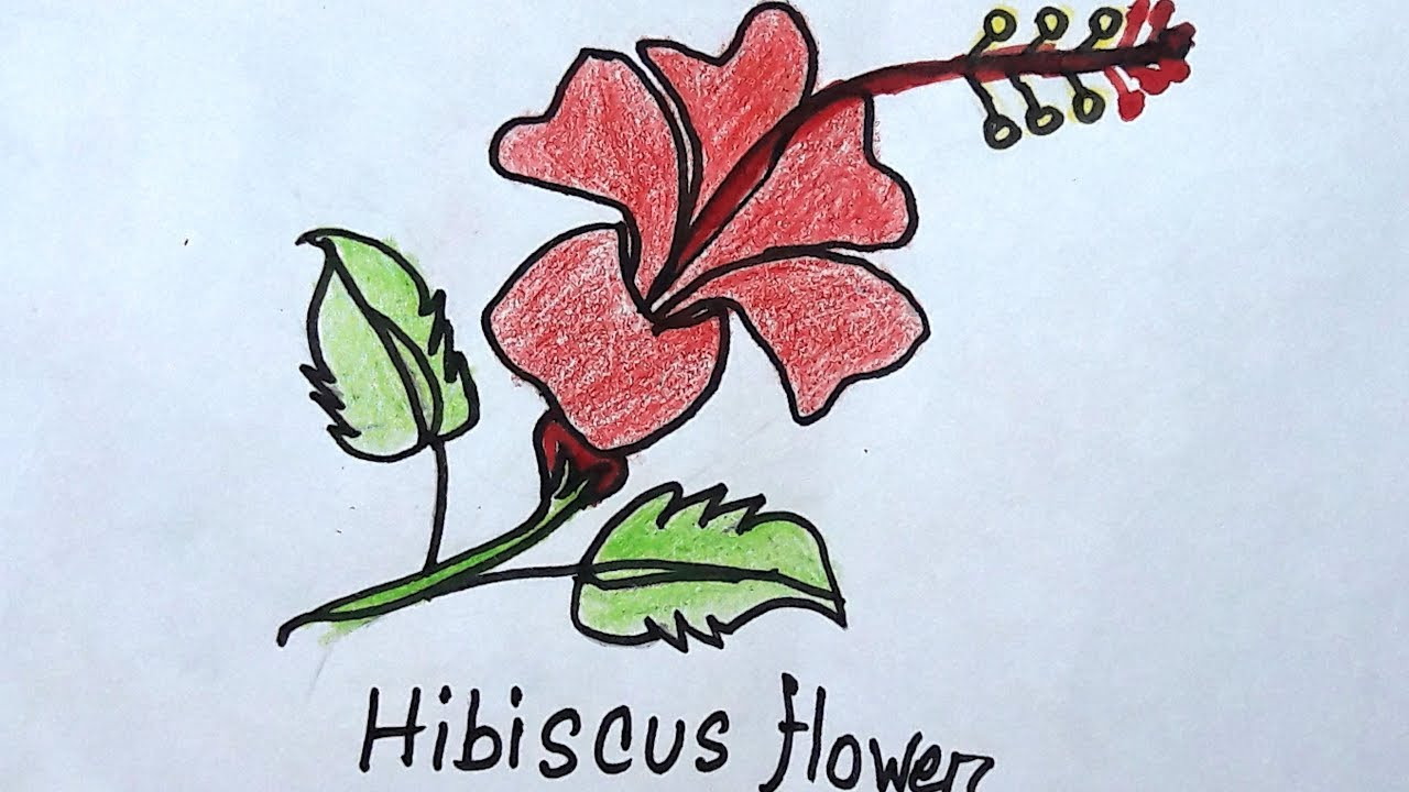 1280x720 How To Draw A Hibiscus Flower Hibiscus Drawing Drawing