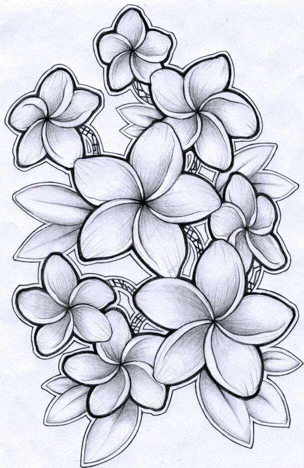 608x937 Black And Grey Plumeria Drawing Tattoo Ideas
