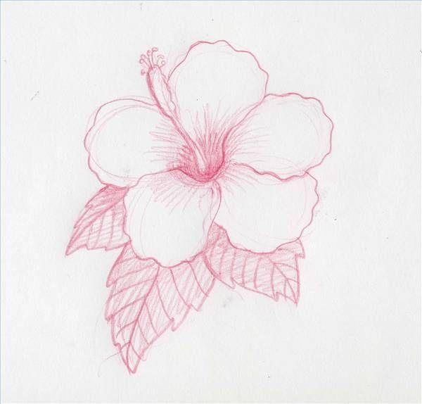 600x574 How To Draw Hawaiian Flowers Step By Step Hawaiian Flowers