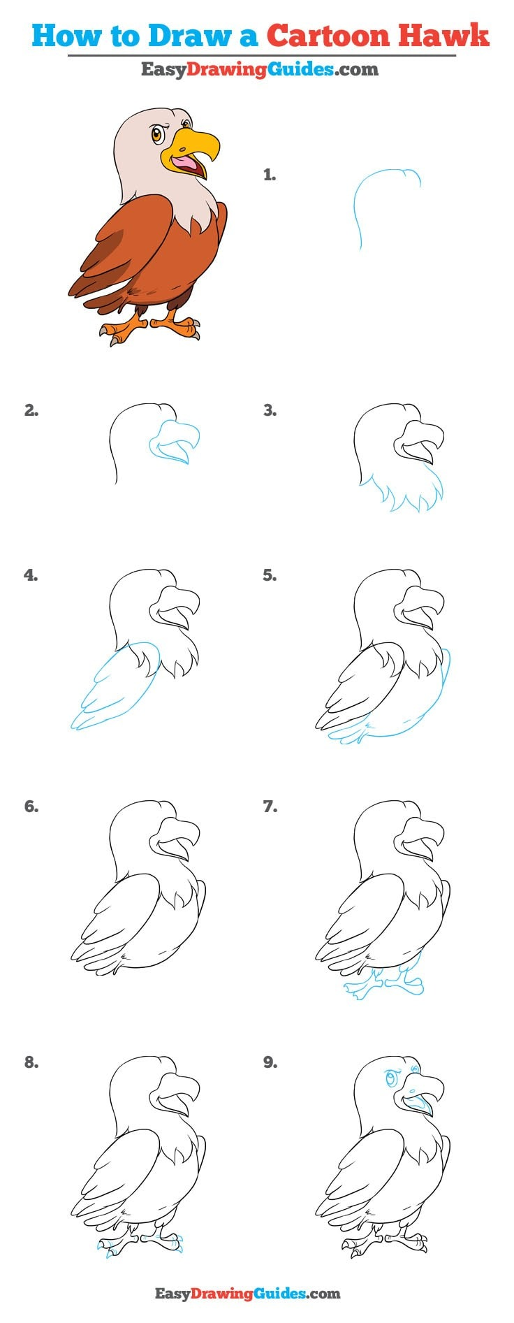 736x1893 How To Draw A Cartoon Hawk Really Easy Drawing Tutorial