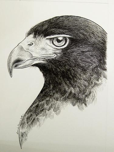 375x500 Drawing