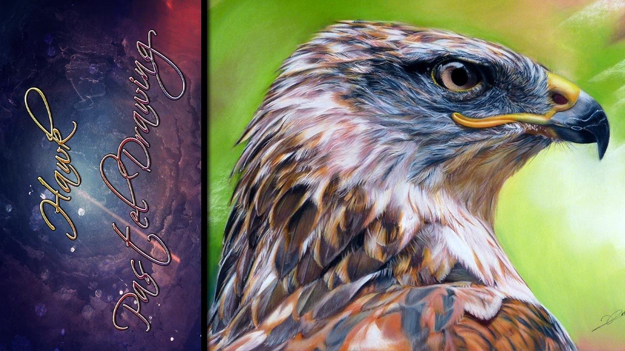 1280x720 Hawk Pastel Drawing