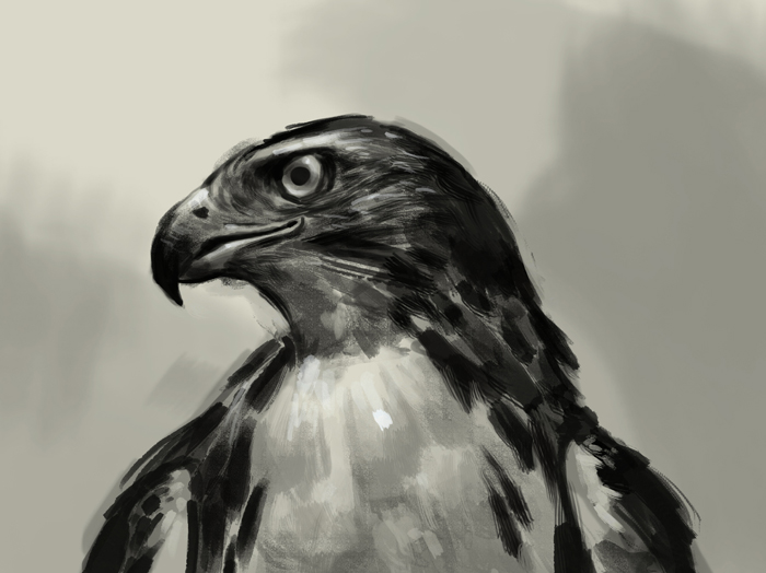 700x524 How To Draw Hawk