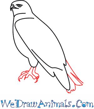 300x350 Hawk 05.png