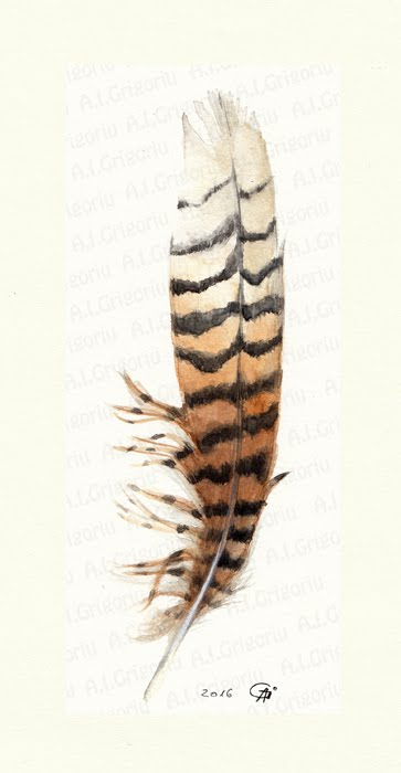 363x700 Anca Iuliana Grigoriu Feathers