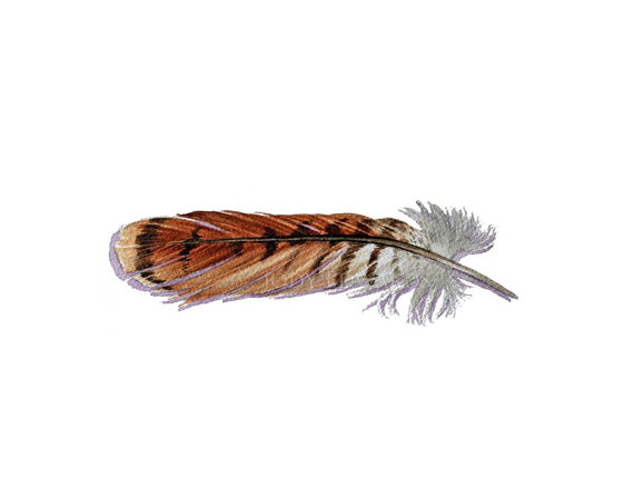 570x449 Feather Number One Of My Shoulder Tattoo Red Tailed Hawk Feather