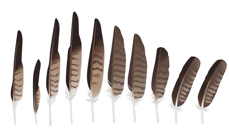804x469 Flying Bird Book 3hawk