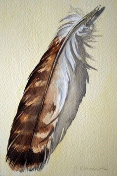 236x356 Hold For Kimberley Feather 48 Red Tailed Hawk Feather
