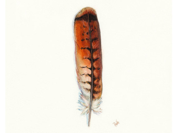 570x427 Red Tail Hawk Feather Native American Indian Watercolor