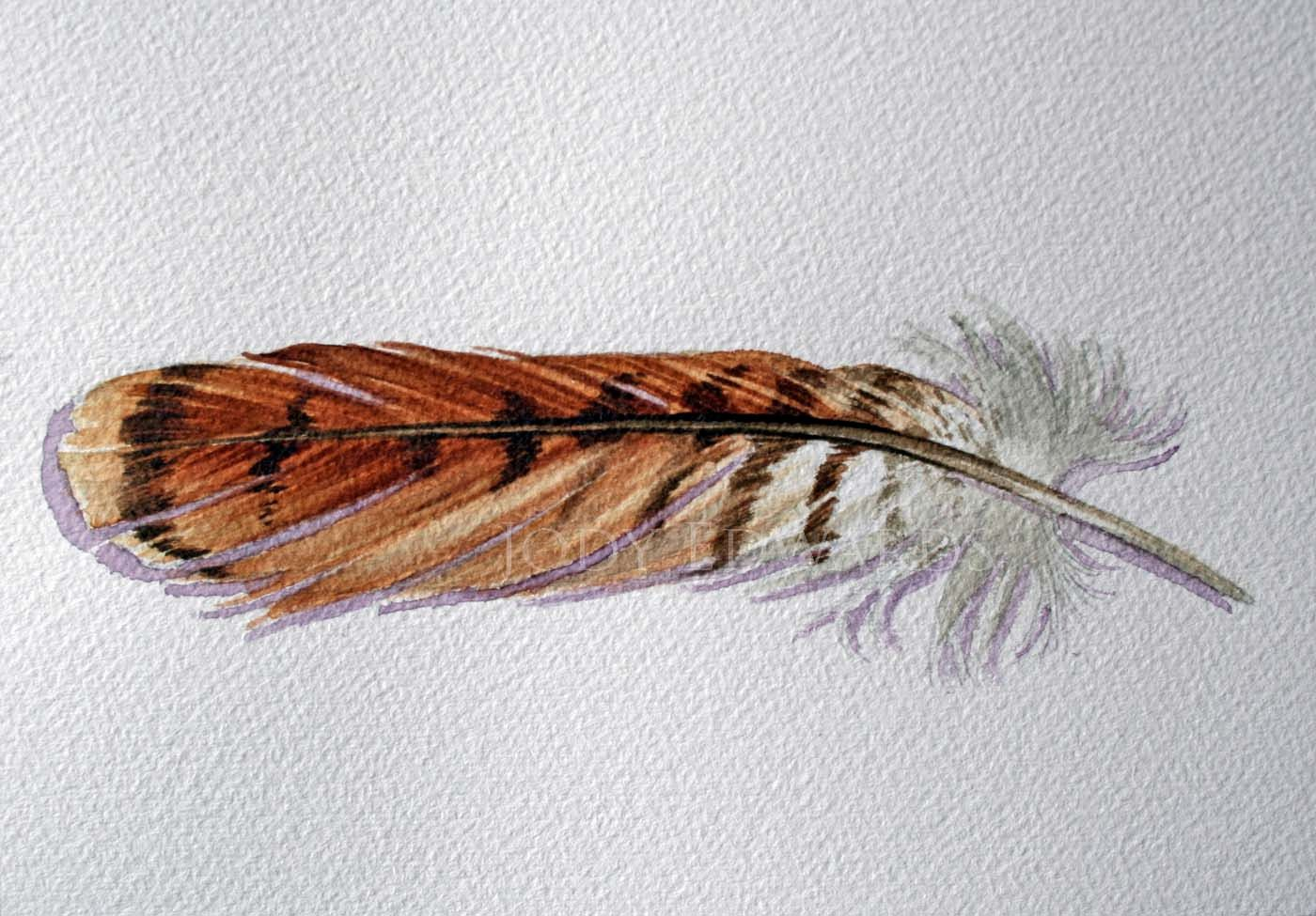 1400x975 Red Tailed Hawk Feather Original Watercolor Feather Jodyvanb