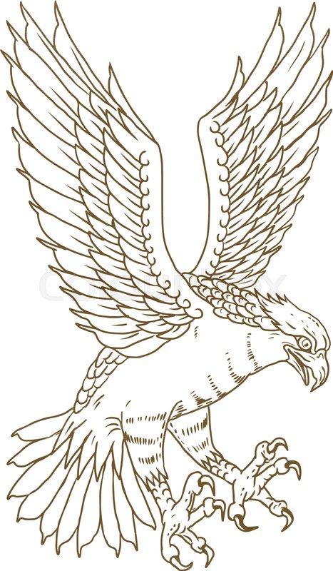 467x800 Drawing Sketch Style Illustration Of Osprey, Sea Hawk, River Hawk