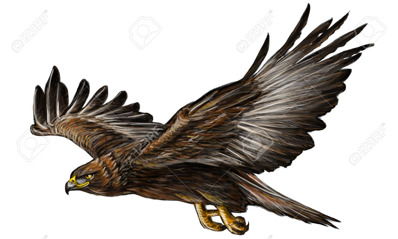 1300x779 Golden Eagle Flying Hand Draw And Paint On White Background Vector
