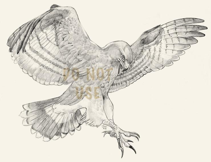 740x567 Grey Ink Flying Hawk Tattoo Design By Glowcat