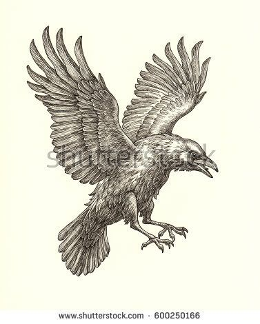 377x470 Ink And Pen Drawing Illustration, Flying Raven On White Background