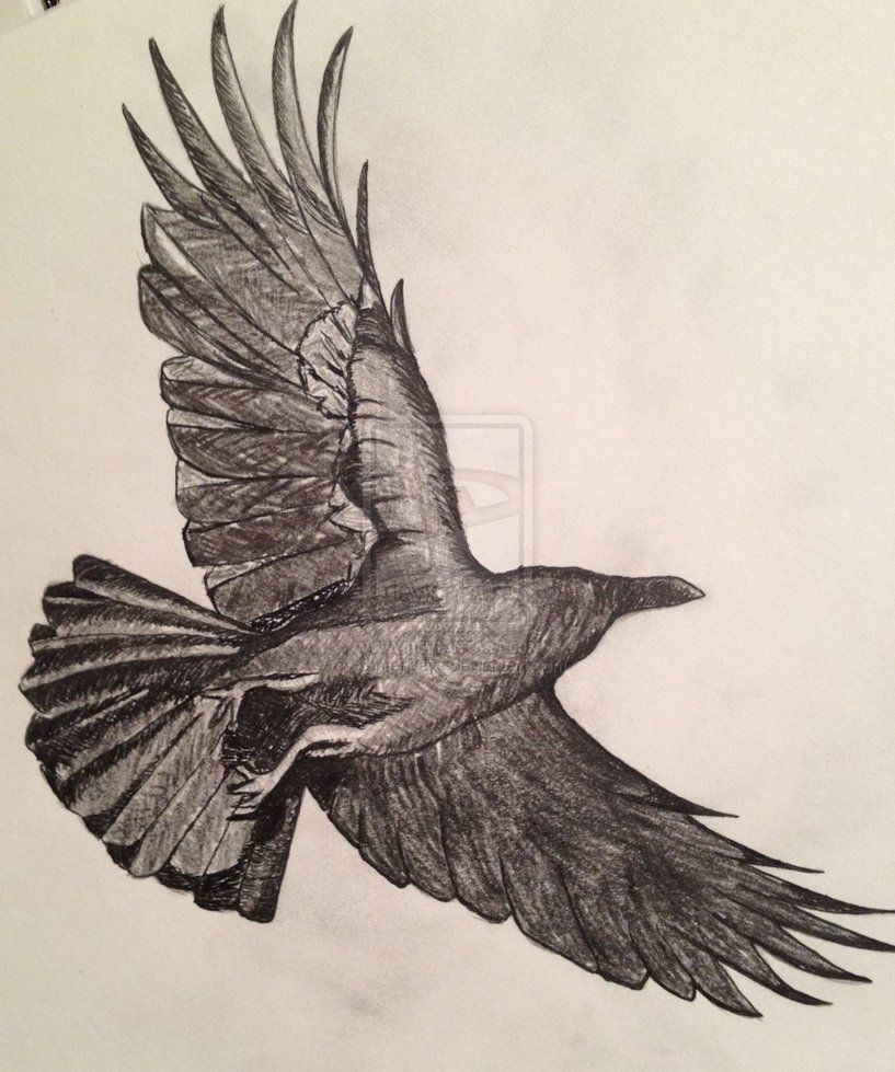 817x979 Crows Flying Drawing