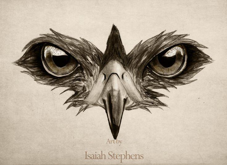 736x534 17 Best Images About Ornithology On Eyes, Feathers