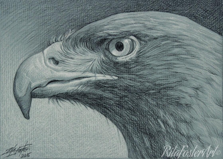 1119x800 Art By Rita Foster Hawk Eye Charcoal Drawing