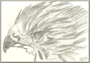 300x211 Bird Head Drawings