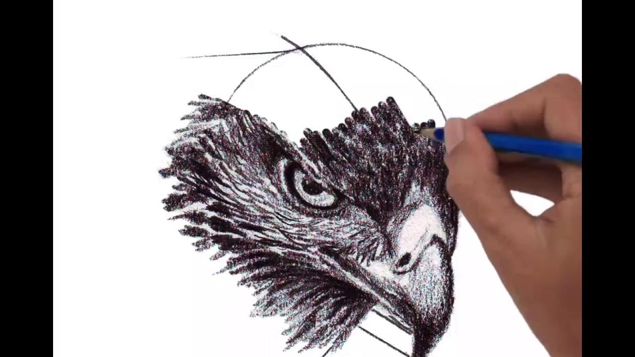 1280x720 Harris's Hawk Head, Perspective View
