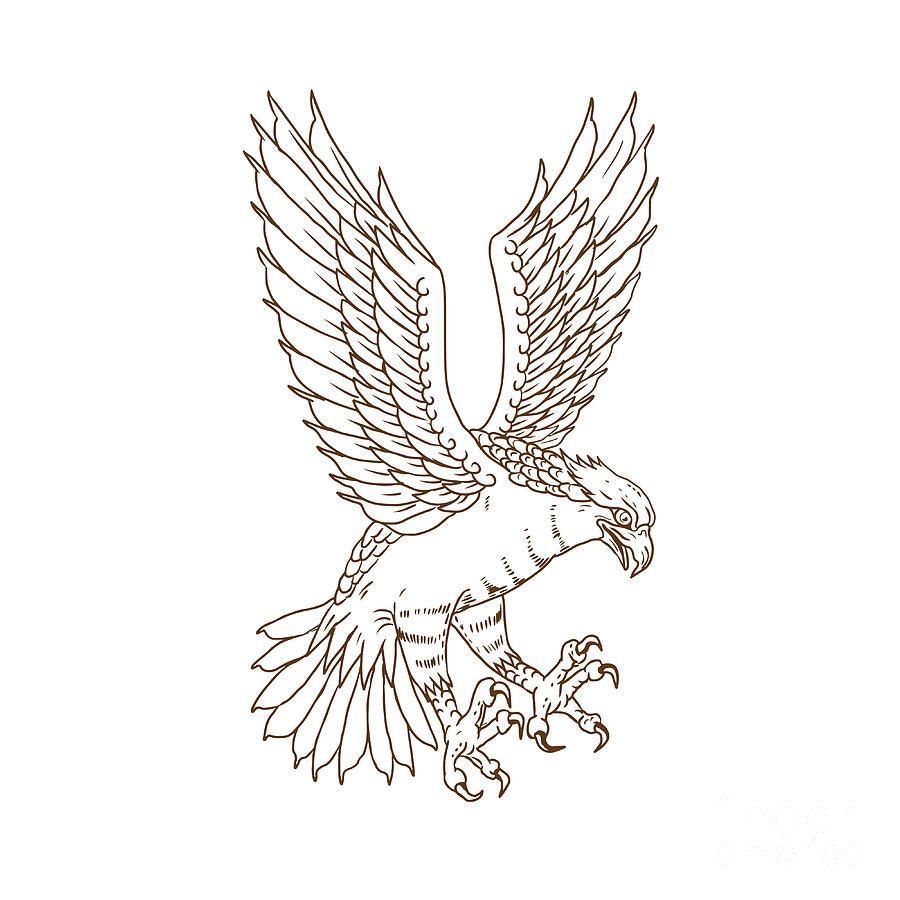 900x900 Osprey Swooping Drawing Digital Art By Aloysius Patrimonio