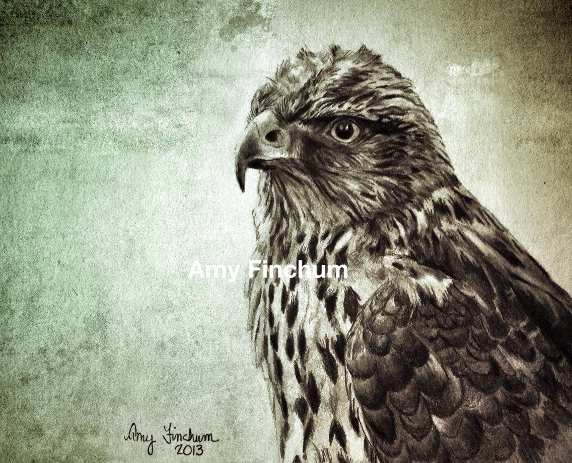 1136x921 Hawk Print Pencil Drawing Hawk Black And White Hawk Bird