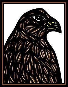 235x300 Black Hawks Drawings