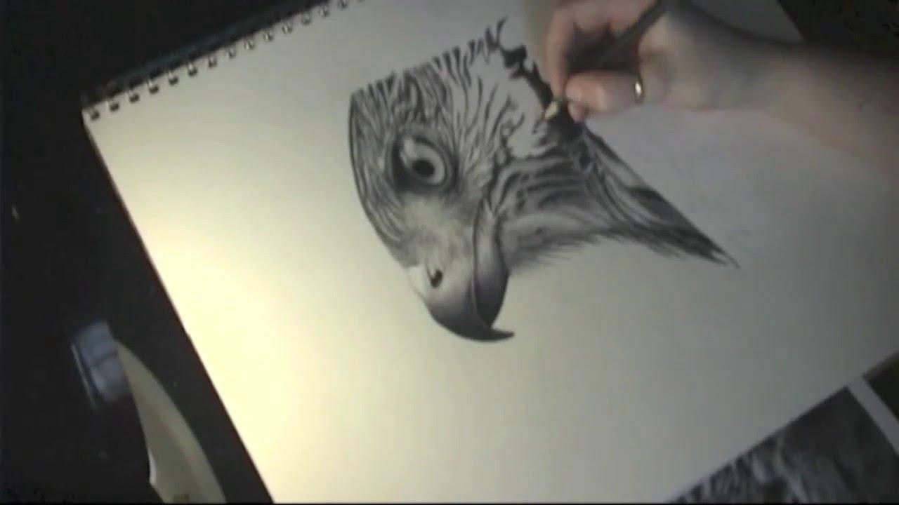 1280x720 How To Draw A Realistic Bird