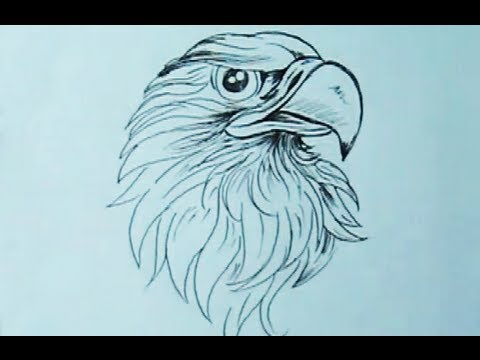 480x360 How To Draw An Eagle Head With Pen Yzarts Yzarts