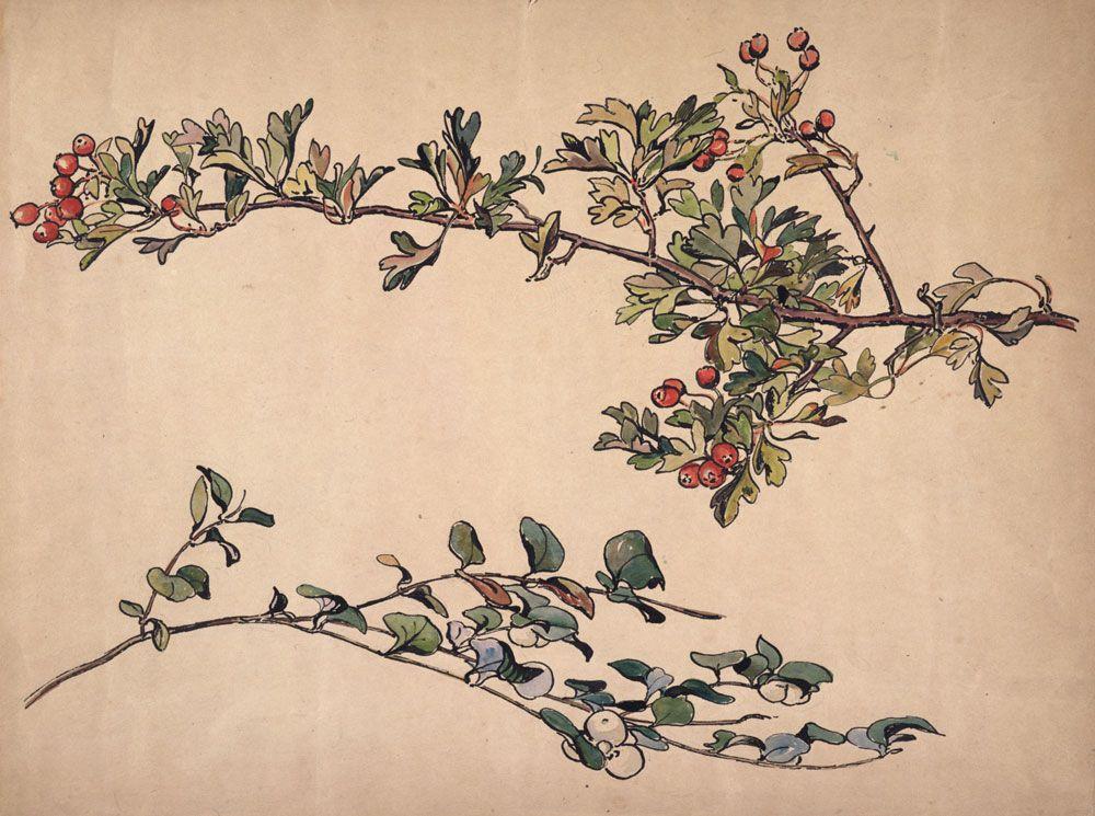 1000x745 Hawthorn Berry Crataegus Laevigata ] Beatrix Potter, Autumn