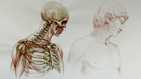 470x264 Human Anatomy For Figurative Artists