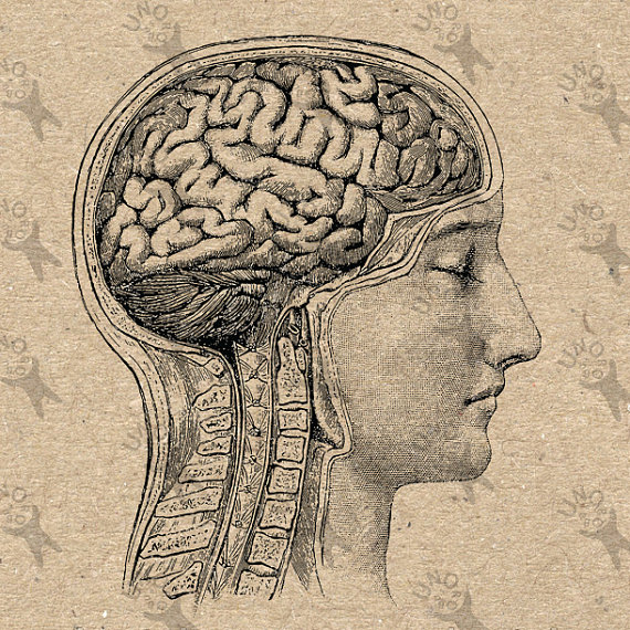 570x570 Vintage Image Head Anatomical Brain Retro Drawing Picture