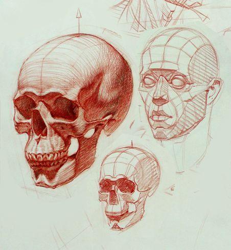 452x489 Gone Head Skull Anatomy Drawing
