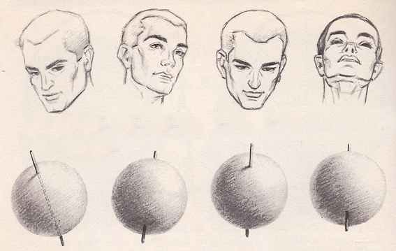 567x359 Head Anatomy Proportions Poses 2 Pacificgraphicdesign
