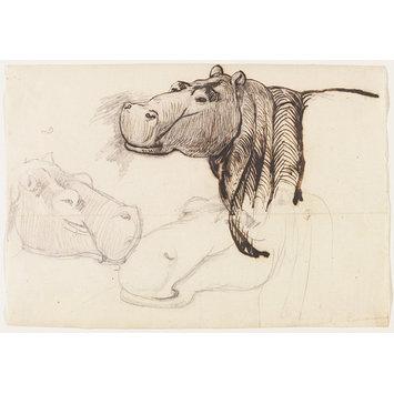 355x355 Study Of A Hippopotamus, Head And Shoulders Salt, Henry Frs Fls