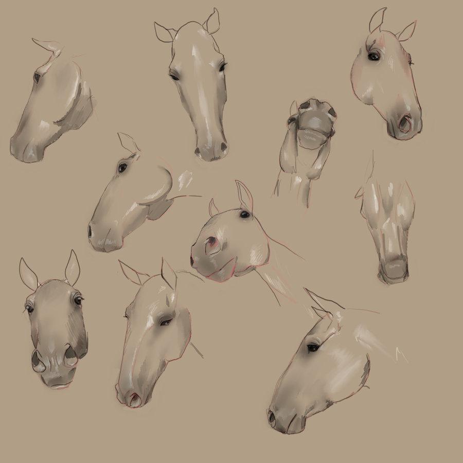 900x900 Horse Head Angles By Eponan64