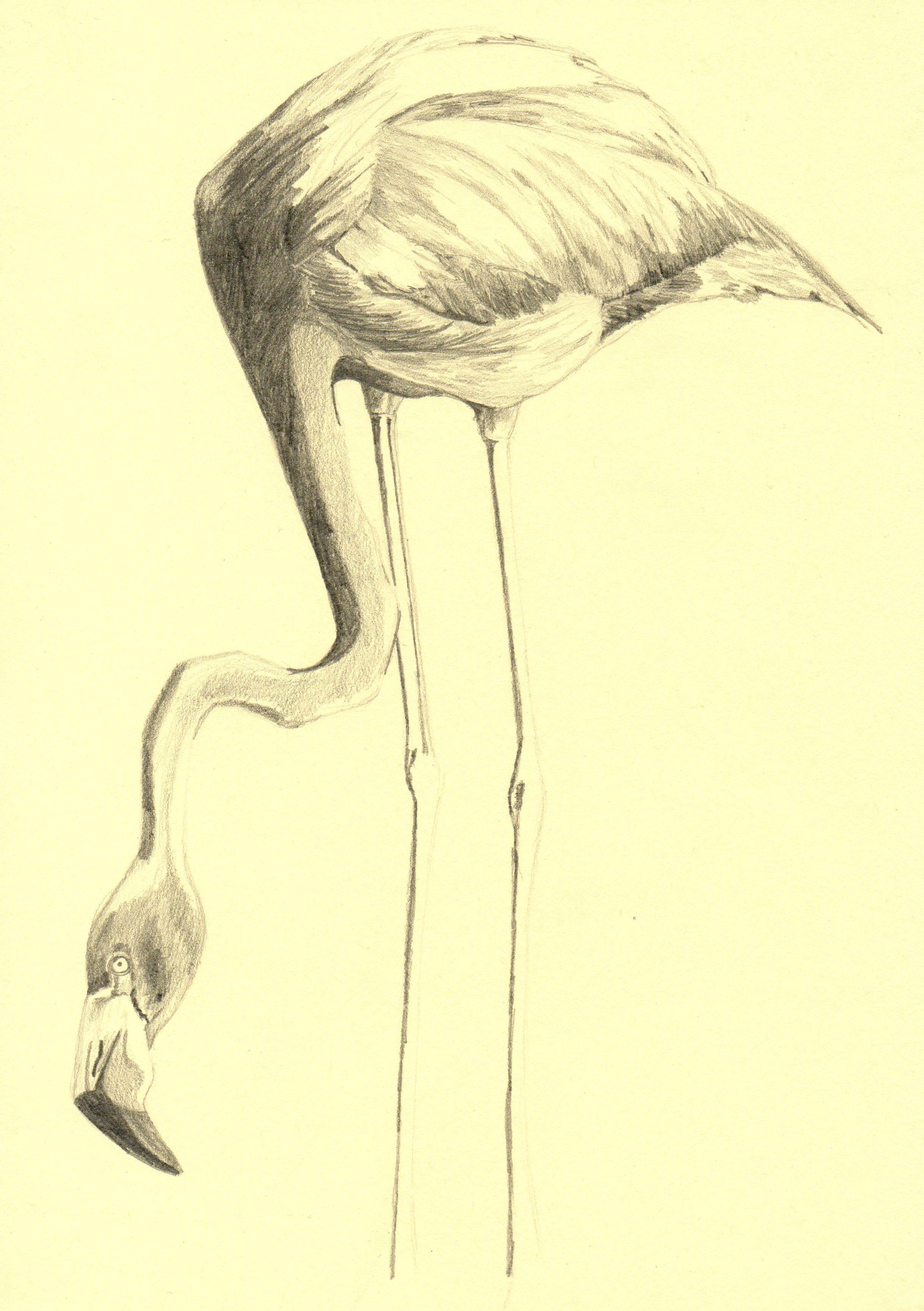 2439x3460 Free Images Pencil, Bird, Wing, Arm, Artwork, Human Body, Art