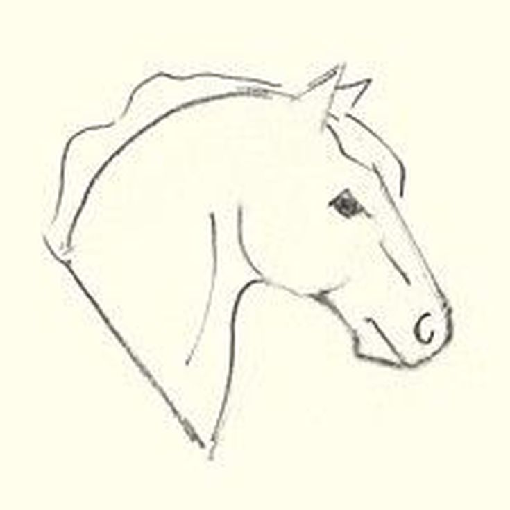 735x735 Here's How To Draw A Horse Head Horse Head, Horse Drawing