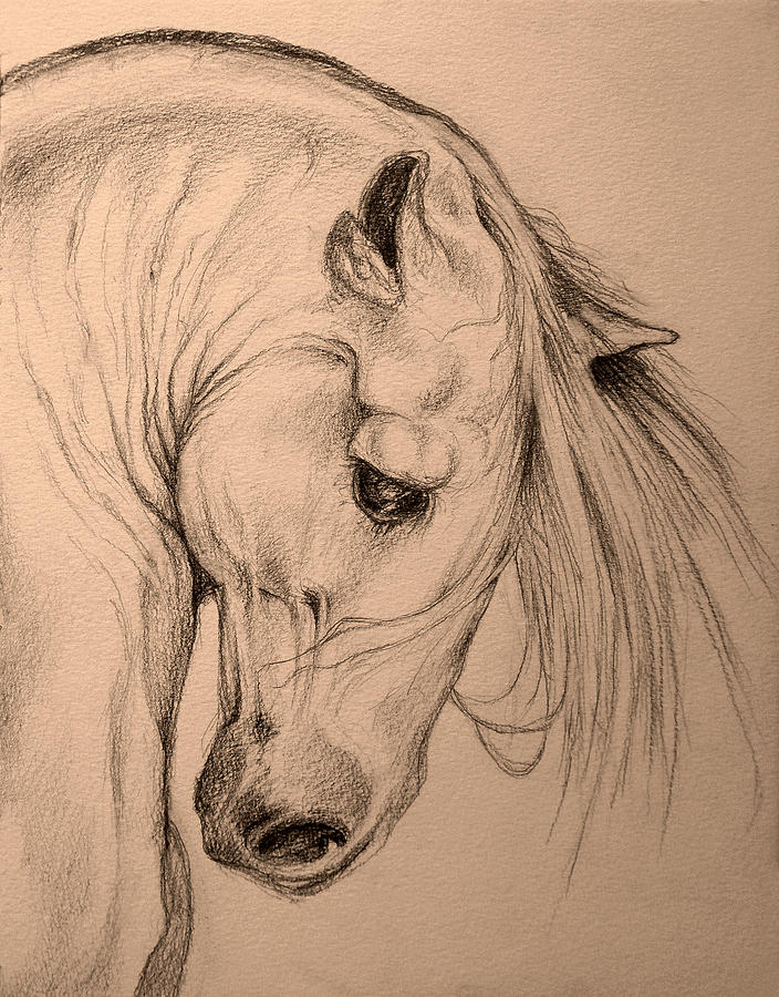 704x900 Horse Head Drawing By Evey Studios