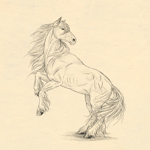 640x640 How To Draw Animals Horses, Their Anatomy And Poses