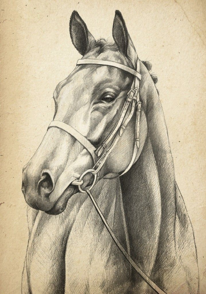 717x1024 Horse Head Drawing