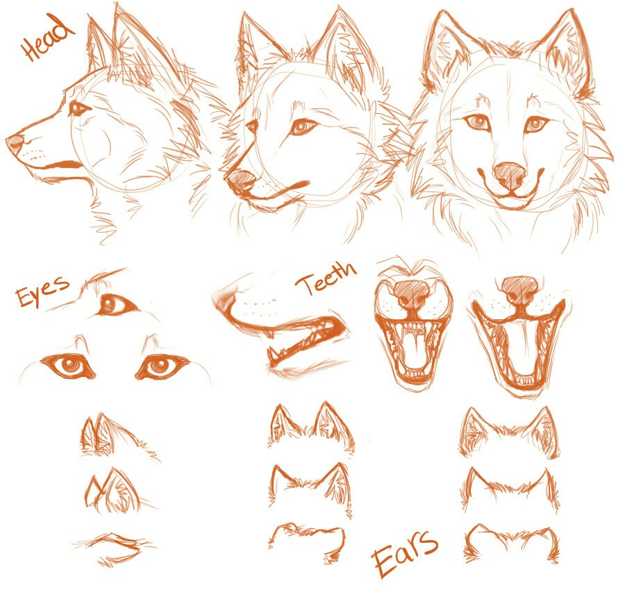 900x850 Simple Wolf Head And Positions Drawing Stuff