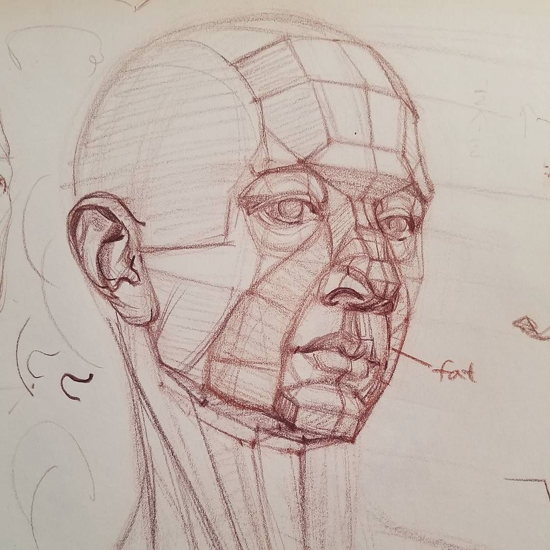 1080x1080 Head Structure Demo In A Student's Pad Anatomy