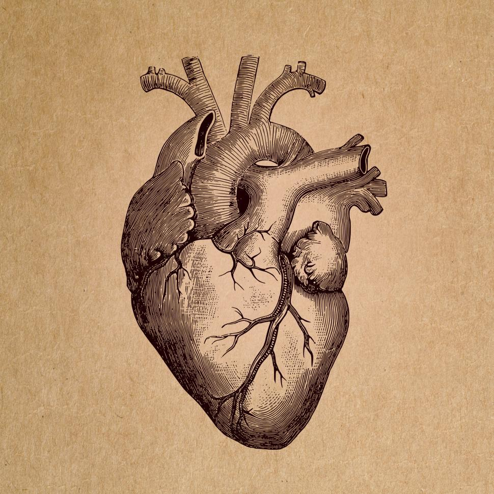 970x970 Get Free Stock Photo Of Human Heart