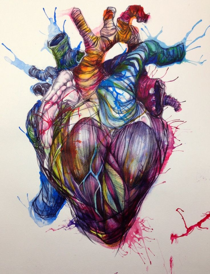 Heart Anatomical Drawing at GetDrawings.com | Free for personal use ...