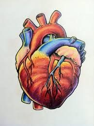 194x260 169 Best Heart Images On Anatomy, Anatomical Heart