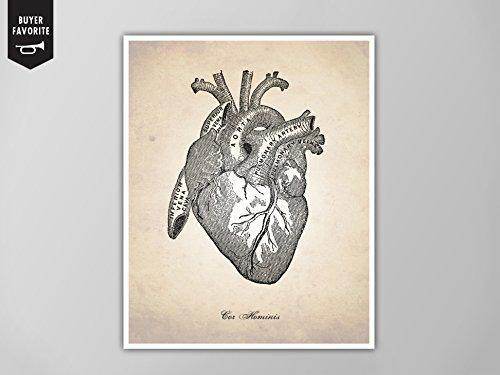 500x375 Human Heart, Human Anatomy Heart Art Print, Human