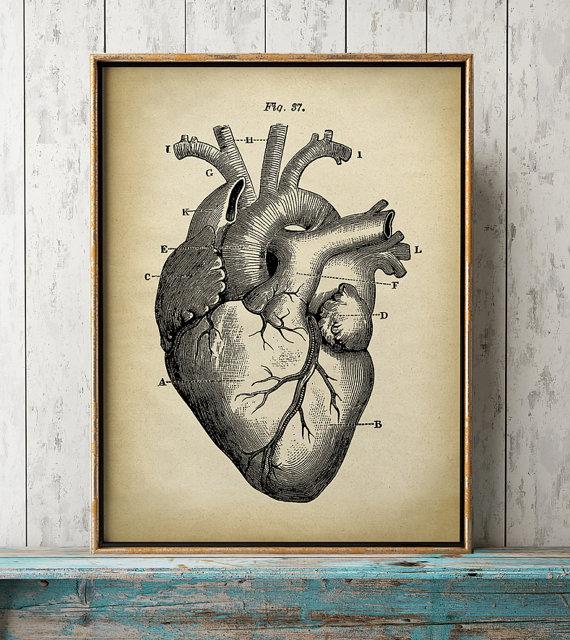 570x640 Heart Anatomy Print Heart Print Anatomical Drawing Anatomy